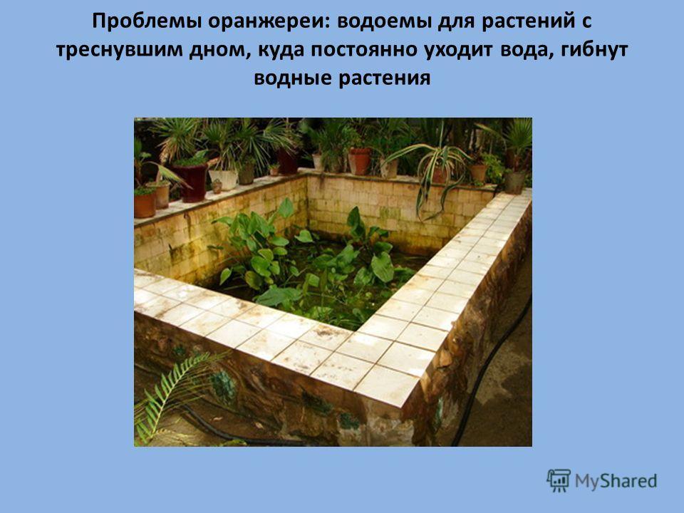 Проблемы оранжереи: водоемы для растений с треснувшим дном, куда постоянно уходит вода, гибнут водные растения