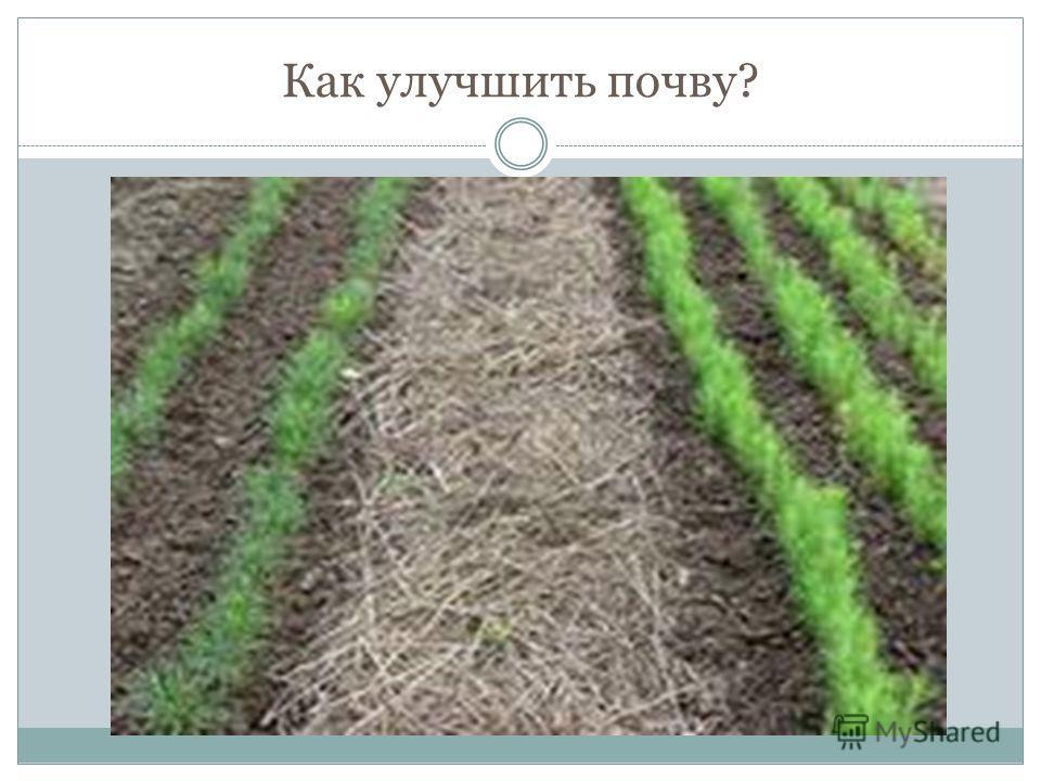 Как улучшить почву?