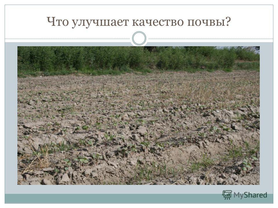 Что улучшает качество почвы?