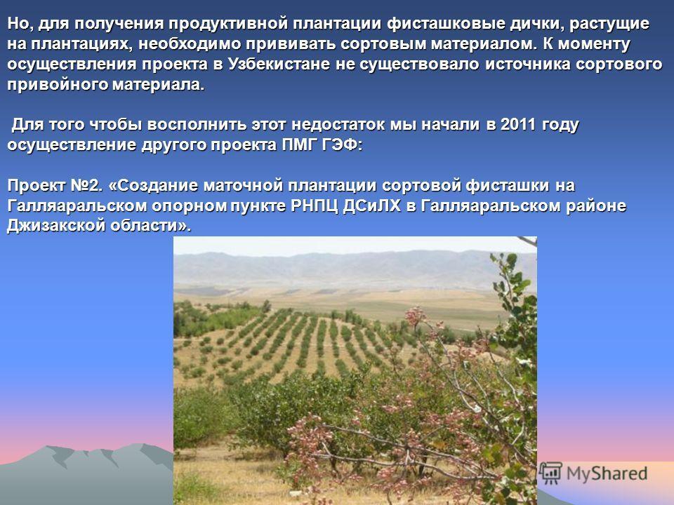 Но, для получения продуктивной плантации фисташковые дички, растущие на плантациях, необходимо прививать сортовым материалом. К моменту осуществления проекта в Узбекистане не существовало источника сортового привойного материала. Для того чтобы воспо