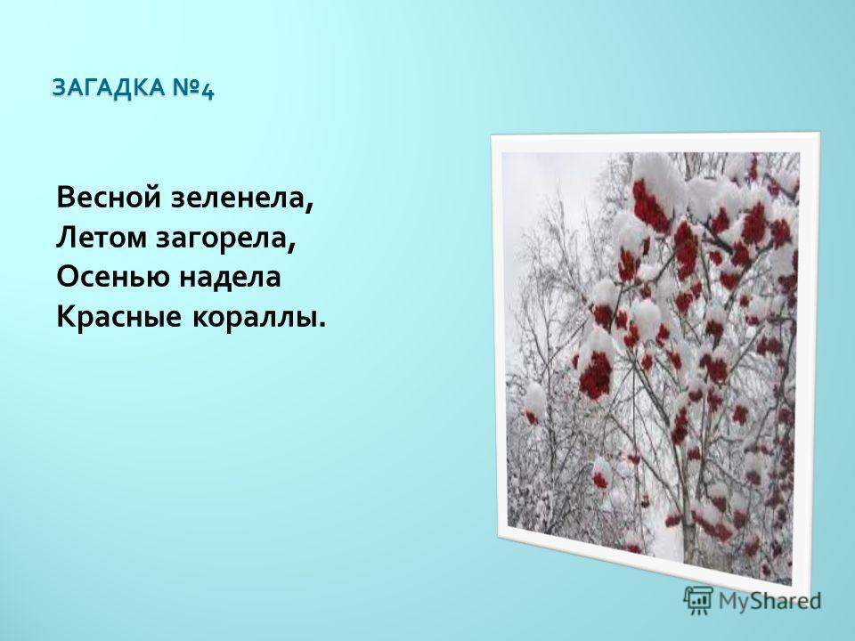 ЗАГАДКА 4 Весной зеленела, Летом загорела, Осенью надела Красные кораллы.