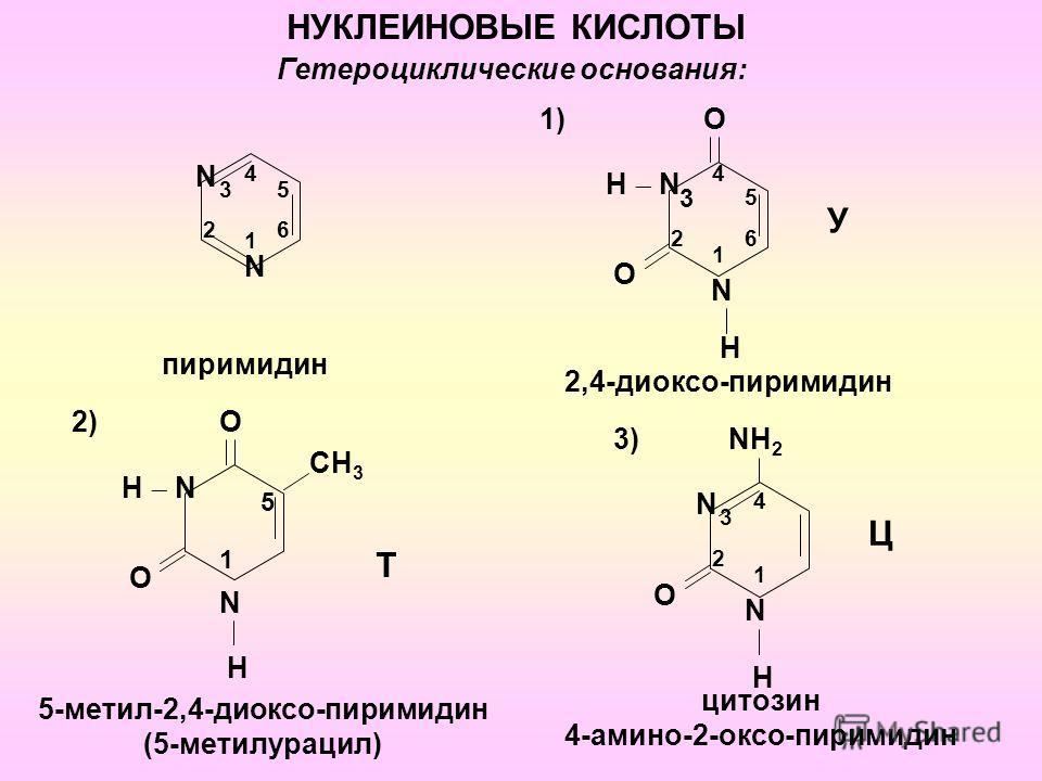 1 N Гетероциклические основания: N 2 3 4 5 6 пиримидин 1) О О 2 N H H N 4 У 2,4-диоксо-пиримидин НУКЛЕИНОВЫЕ КИСЛОТЫ 2) Н N 5 СH 3 Т О О N H 5-метил-2,4-диоксо-пиримидин (5-метилурацил) NH 2 N Ц 4 О 3) N H цитозин 4-амино-2-оксо-пиримидин 1 3 5 6 1 1