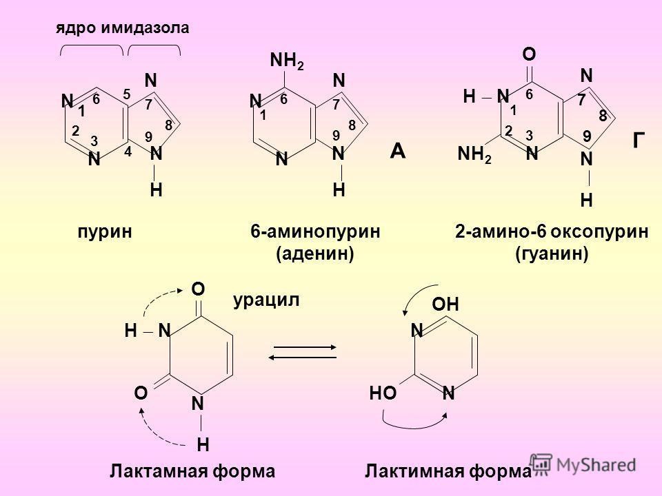 1 2 6 5 7 ядро имидазола 8 9 4 3 пурин N N 6 NН2NН2 А 6-аминопурин (аденин) N 2 6 Н N NН2NН2 2-амино-6 оксопурин (гуанин) Г N H N N N N H N N N H О О Н N О N H ОН NНО N Лактамная формаЛактимная форма 1 7 8 9 1 3 7 8 9 урацил