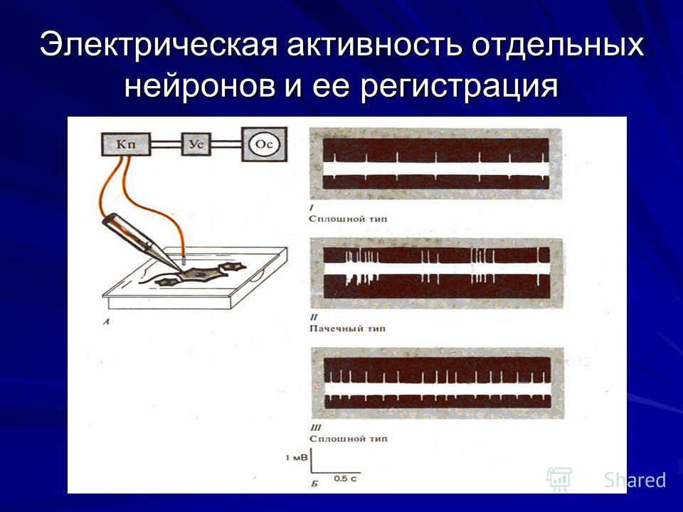 Электрическая активность отдельных нейронов и ее регистрация