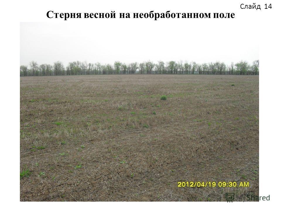 Стерня весной на необработанном поле Слайд 14