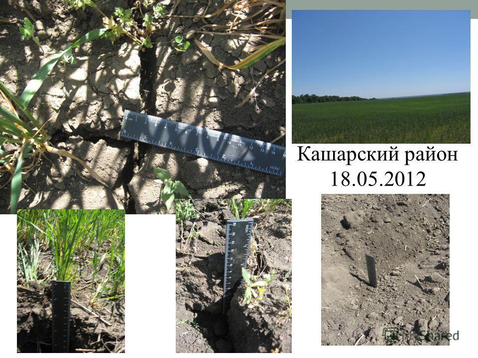 Кашарский район 18.05.2012