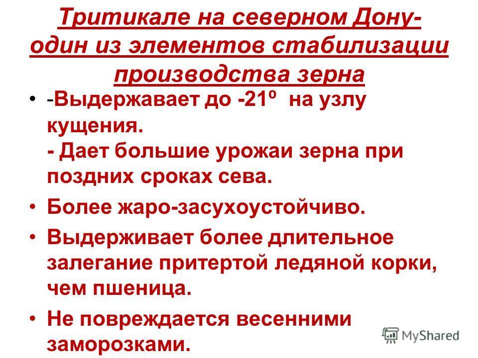Тритикале на северном Дону- один из элементов стабилизации производства зерна -Выдержавает до -21 на узлу кущения. - Дает большие урожаи зерна при поздних сроках сева. Более жаро-засухоустойчиво. Выдерживает более длительное залегание притертой ледян