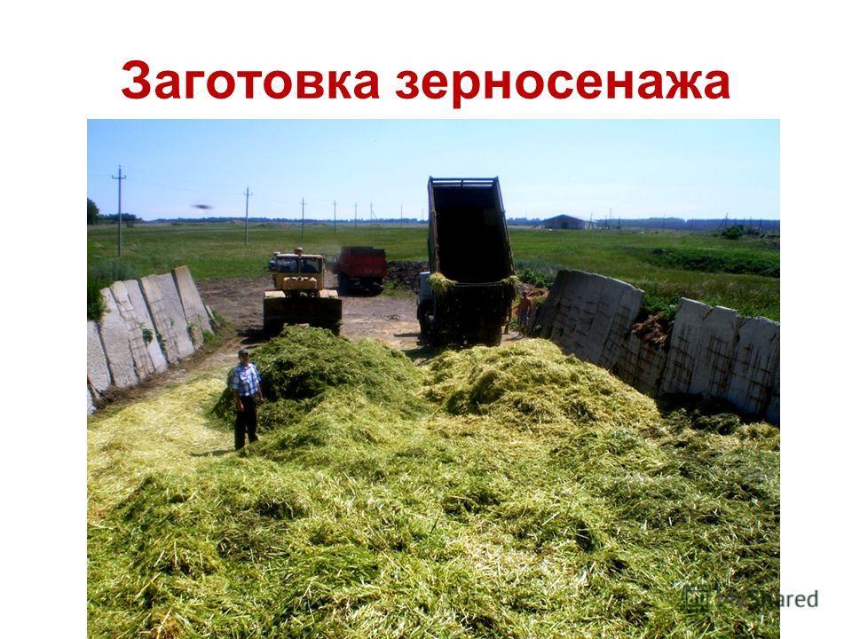 Заготовка зерносенажа