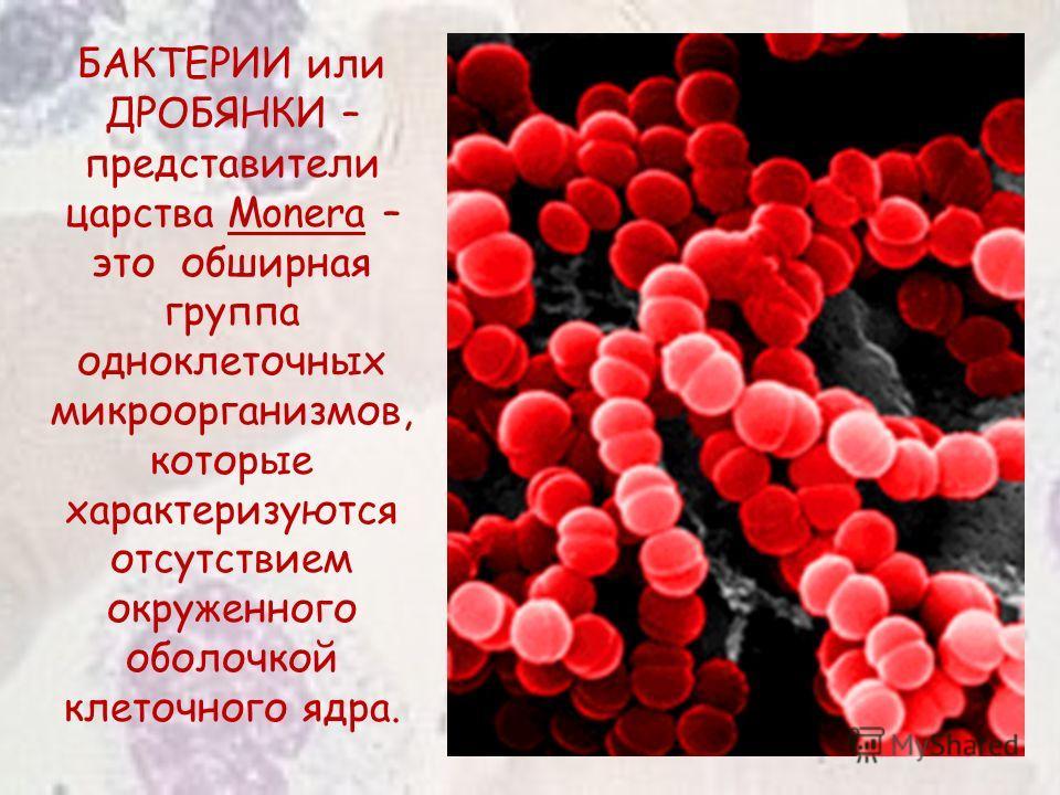 БАКТЕРИИ или ДРОБЯНКИ – представители царства Monera – это обширная группа одноклеточных микроорганизмов, которые характеризуются отсутствием окруженного оболочкой клеточного ядра.