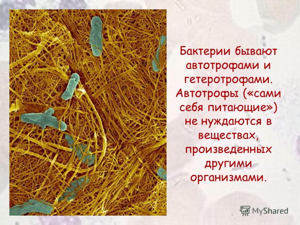 Бактерии бывают автотрофами и гетеротрофами. Автотрофы («сами себя питающие») не нуждаются в веществах, произведенных другими организмами.