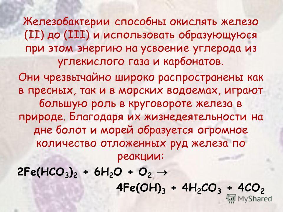 Железобактерии способны окислять железо (II) до (III) и использовать образующуюся при этом энергию на усвоение углерода из углекислого газа и карбонатов. Они чрезвычайно широко распространены как в пресных, так и в морских водоемах, играют большую ро