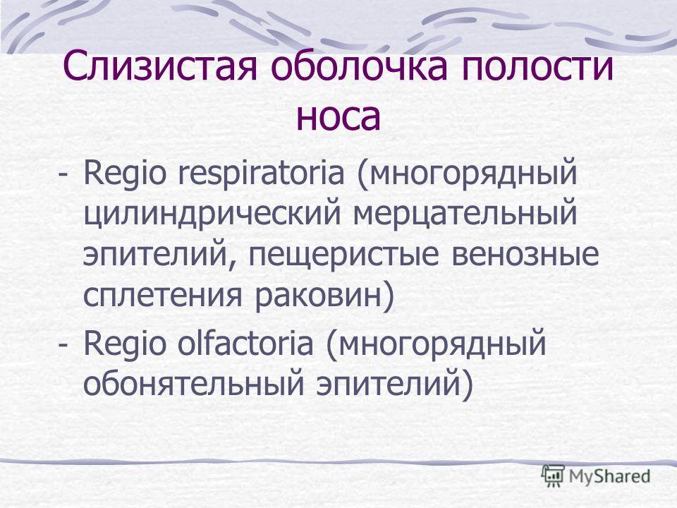Слизистая оболочка полости носа - Regio respiratoria (многорядный цилиндрический мерцательный эпителий, пещеристые венозные сплетения раковин) - Regio olfactoria (многорядный обонятельный эпителий)