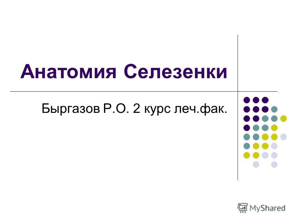Анатомия Селезенки Быргазов Р.О. 2 курс леч.фак.
