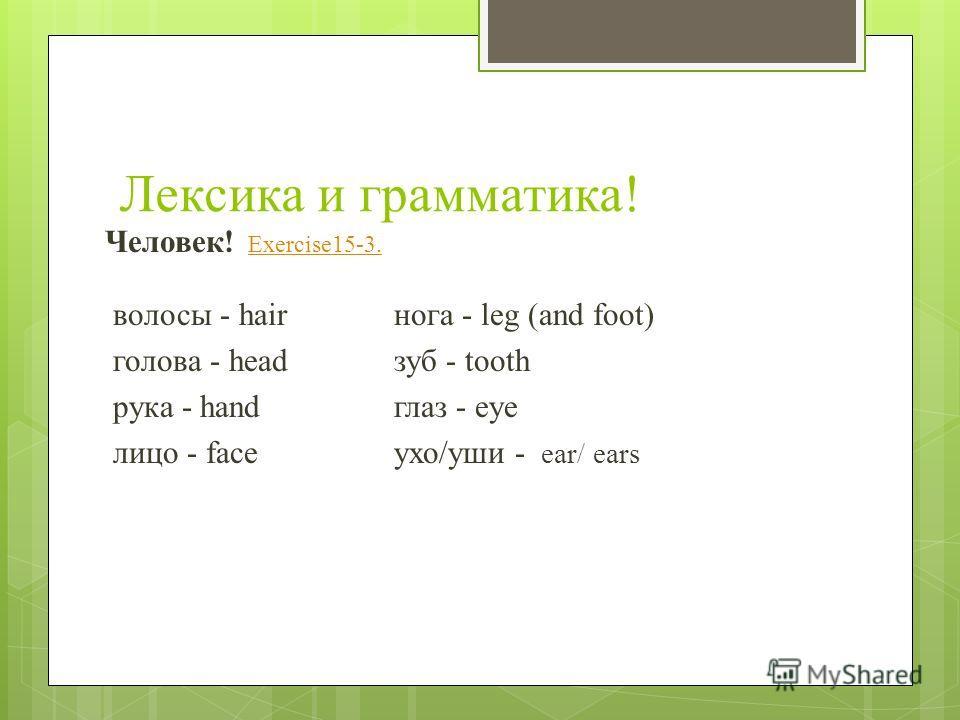 Лексика и грамматика! Человек! Exercise15-3. Exercise15-3. волосы - hair нога - leg (and foot) голова - head зуб - tooth рука - hand глаз - eye лицо - face ухо/уши - ear/ ears