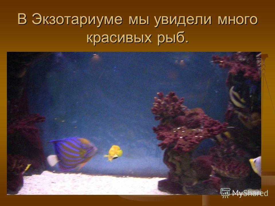 В Экзотариуме мы увидели много красивых рыб.