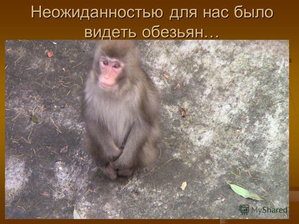 Неожиданностью для нас было видеть обезьян…