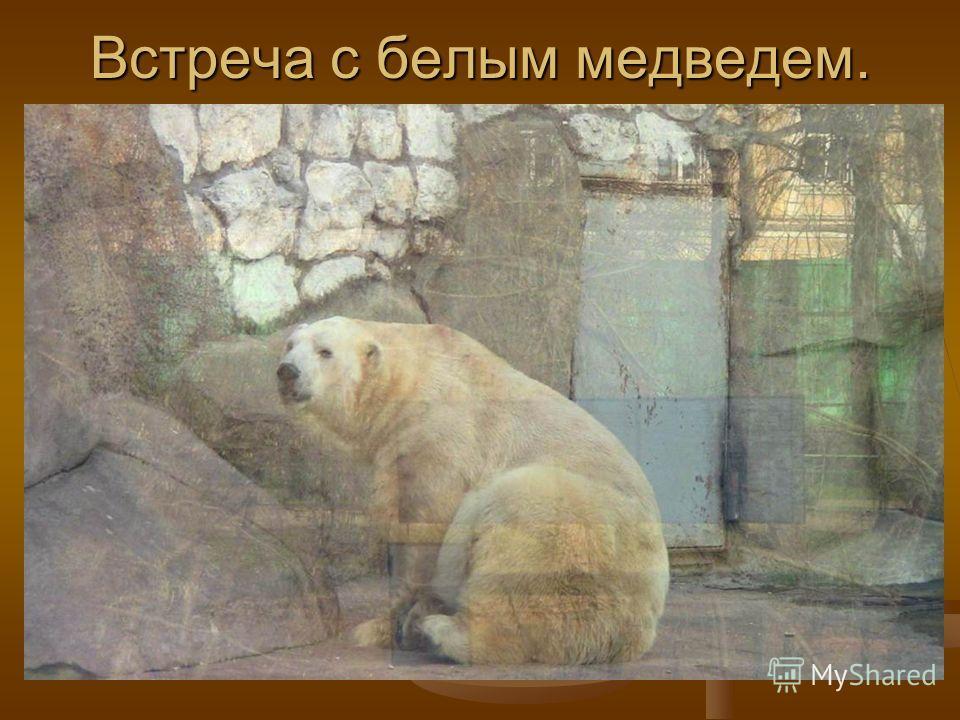 Встреча с белым медведем.
