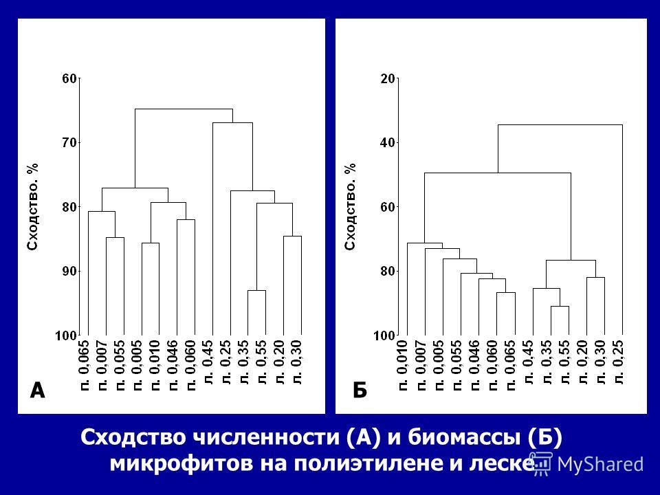 Сходство численности (А) и биомассы (Б) микрофитов на полиэтилене и леске АБ