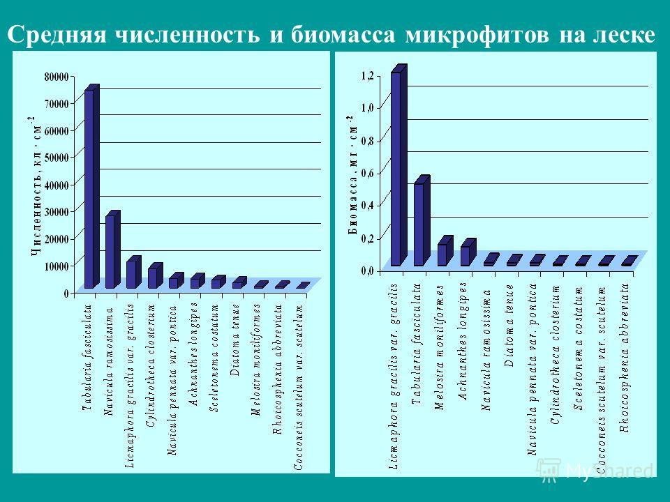 Средняя численность и биомасса микрофитов на леске
