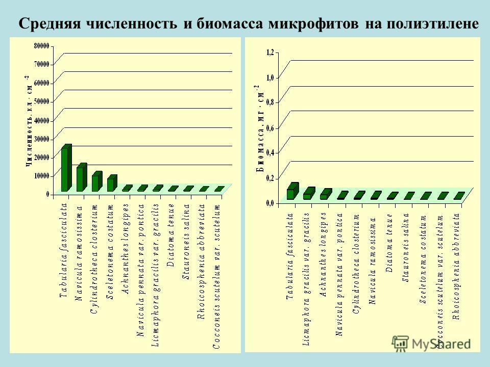 Средняя численность и биомасса микрофитов на полиэтилене