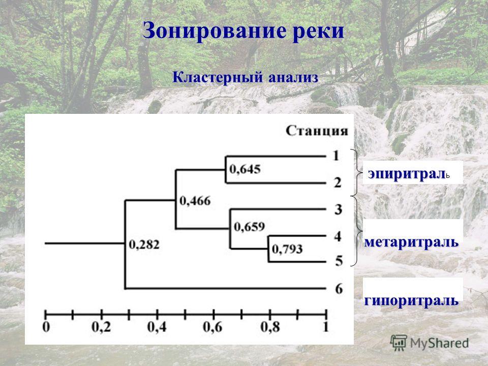 Зонирование реки эпиритрал эпиритрал ь метаритраль гипоритраль Кластерный анализ