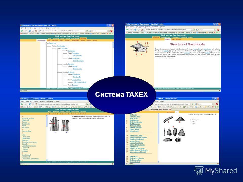 Система TAXEX
