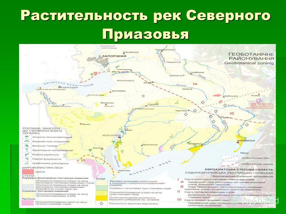 Растительность рек Северного Приазовья