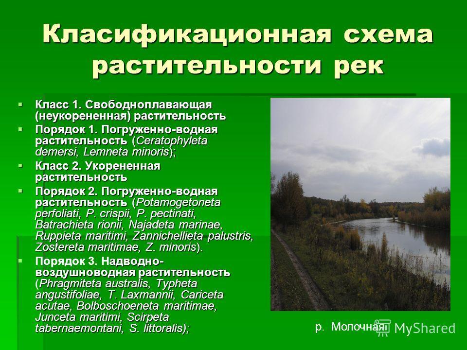 Класификационная схема растительности рек Класс 1. Свободноплавающая (неукорененная) растительность Класс 1. Свободноплавающая (неукорененная) растительность Порядок 1. Погруженно-водная растительность (Ceratophyleta demersi, Lemneta minoris); Порядо