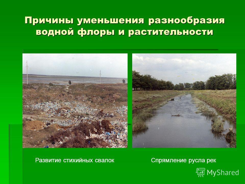 Причины уменьшения разнообразия водной флоры и растительности Развитие стихийных свалокСпрямление русла рек