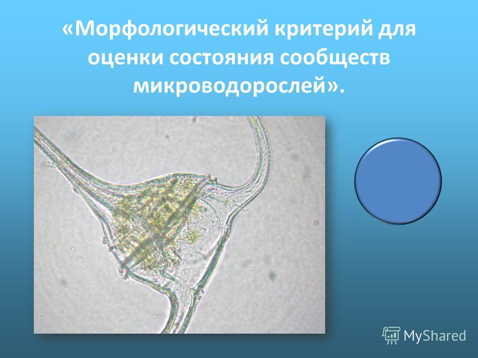 «Морфологический критерий для оценки состояния сообществ микроводорослей».