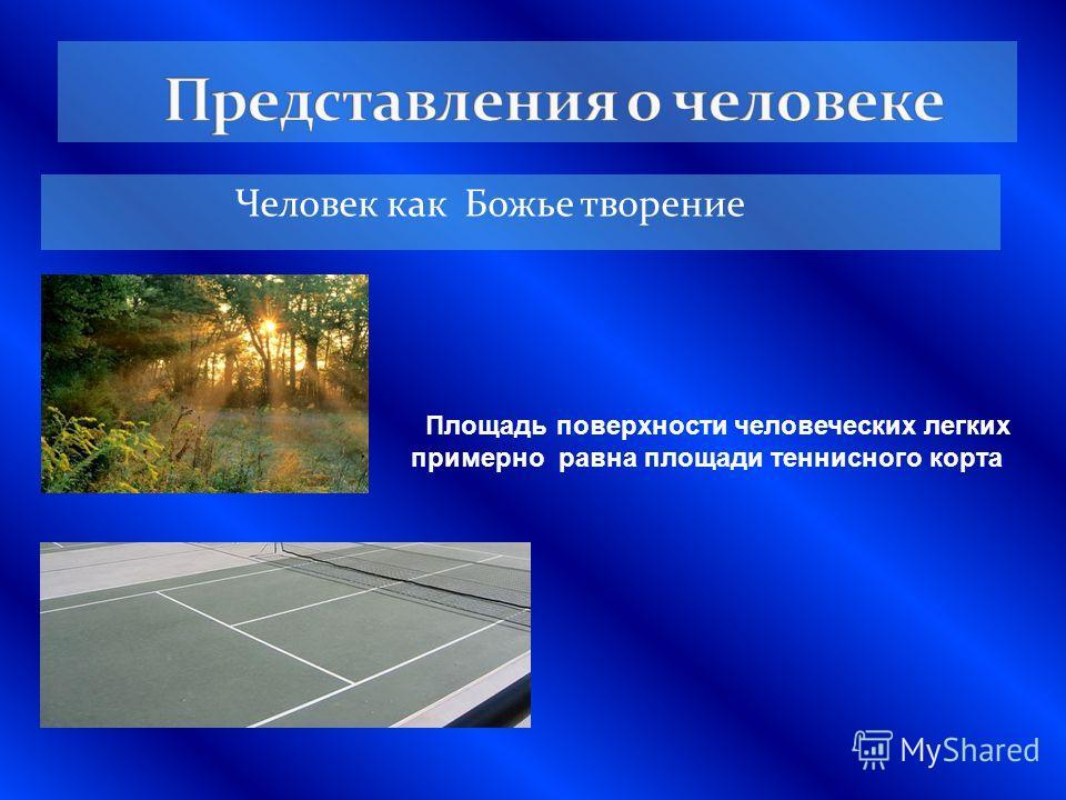Человек как Божье творение Площадь поверхности человеческих легких примерно равна площади теннисного корта
