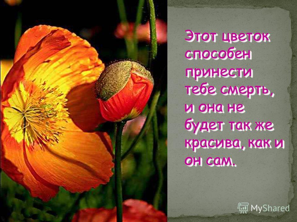 Этот цветок способен принести тебе смерть, и она не будет так же красива, как и он сам.