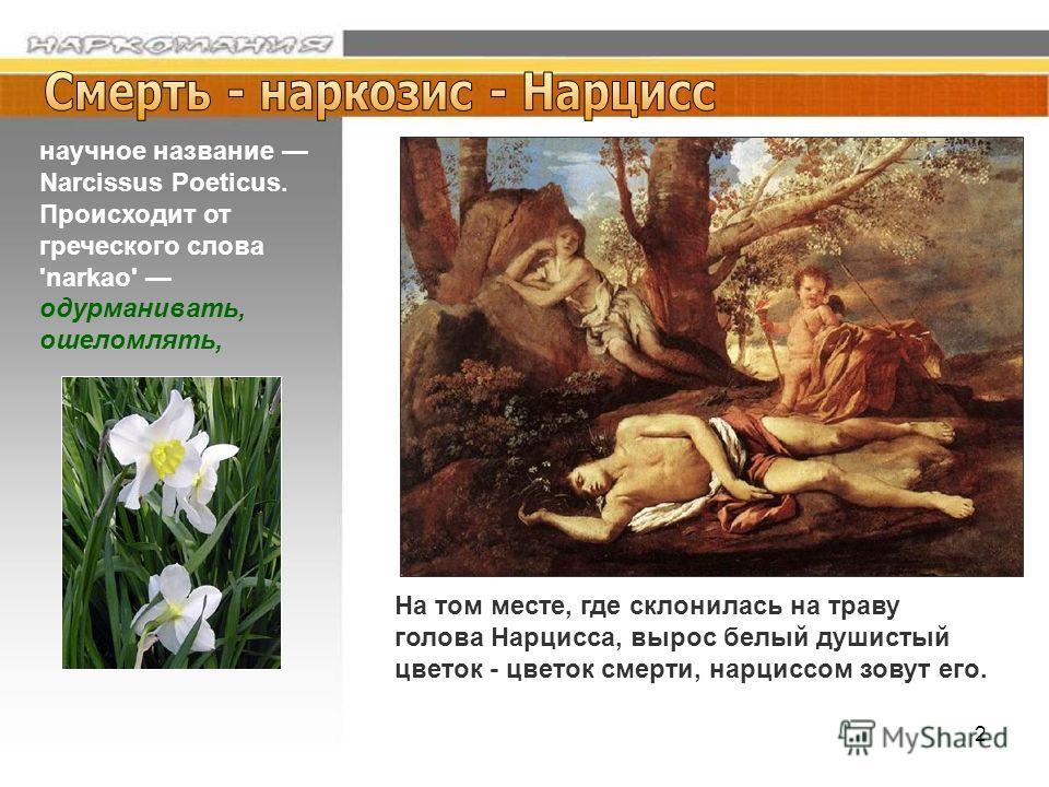 2 На том месте, где склонилась на траву голова Нарцисса, вырос белый душистый цветок - цветок смерти, нарциссом зовут его. научное название Narcissus Poeticus. Происходит от греческого слова 'narkao' одурманивать, ошеломлять,