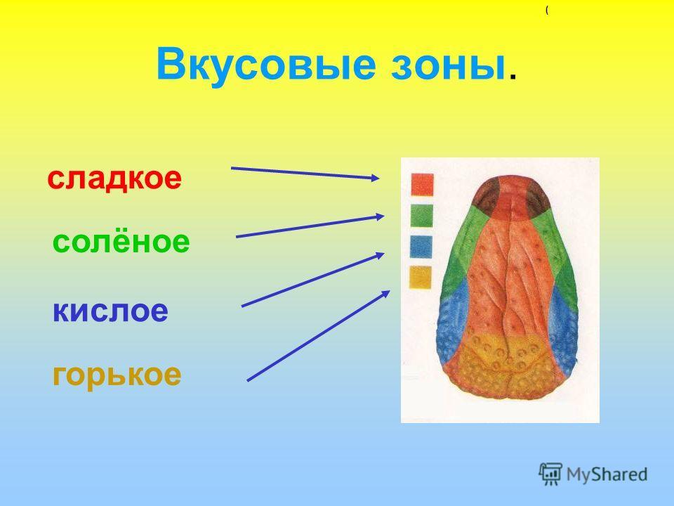 Вкусовые зоны. сладкое солёное кислое горькое (
