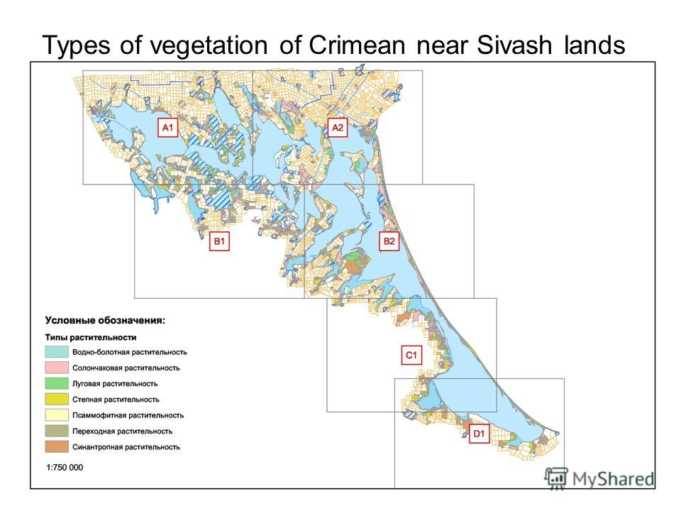 Types of vegetation of Crimean near Sivash lands