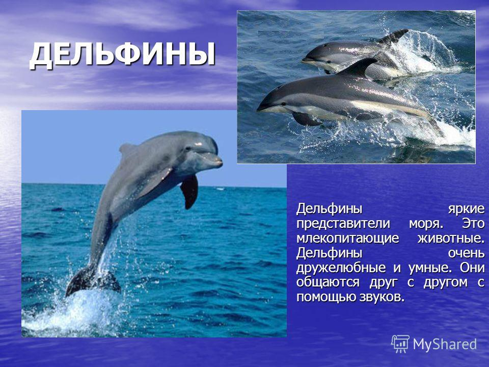 ДЕЛЬФИНЫ Дельфины яркие представители моря. Это млекопитающие животные. Дельфины очень дружелюбные и умные. Они общаются друг с другом с помощью звуков. Дельфины яркие представители моря. Это млекопитающие животные. Дельфины очень дружелюбные и умные