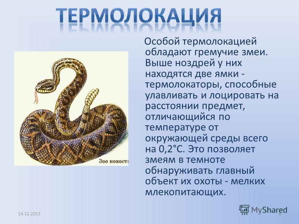 Особой термолокацией обладают гремучие змеи. Выше ноздрей у них находятся две ямки - термолокаторы, способные улавливать и лоцировать на расстоянии предмет, отличающийся по температуре от окружающей среды всего на 0,2°С. Это позволяет змеям в темноте