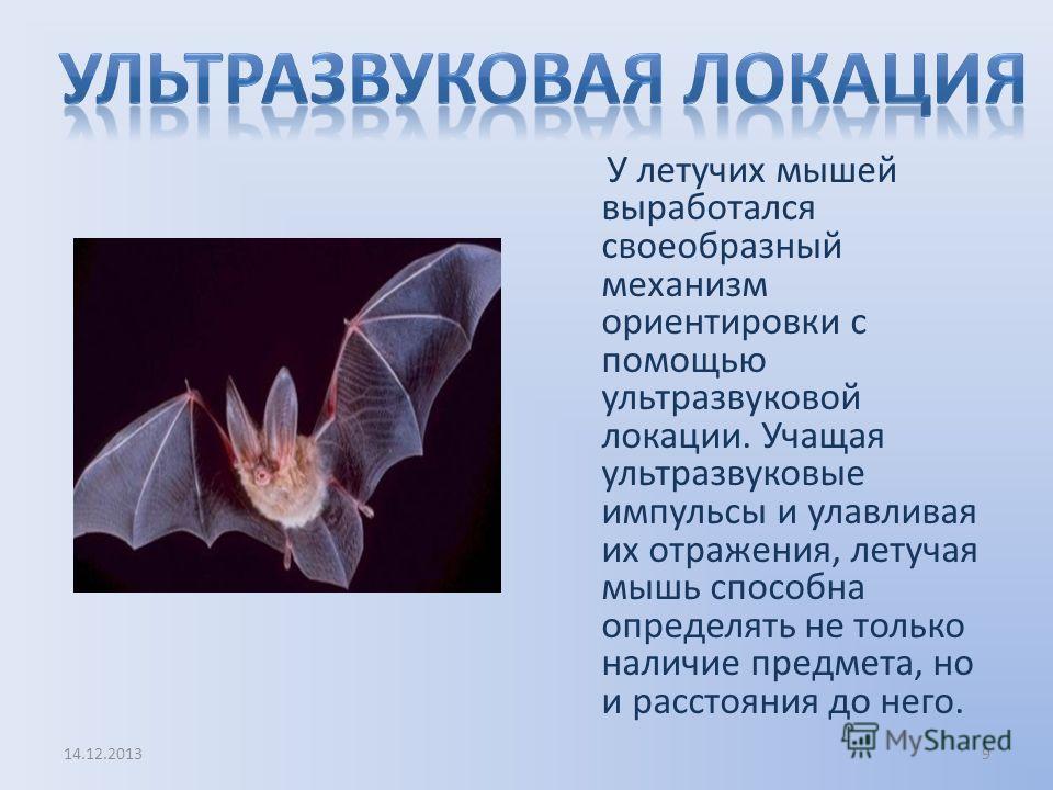 У летучих мышей выработался своеобразный механизм ориентировки с помощью ультразвуковой локации. Учащая ультразвуковые импульсы и улавливая их отражения, летучая мышь способна определять не только наличие предмета, но и расстояния до него. 14.12.2013