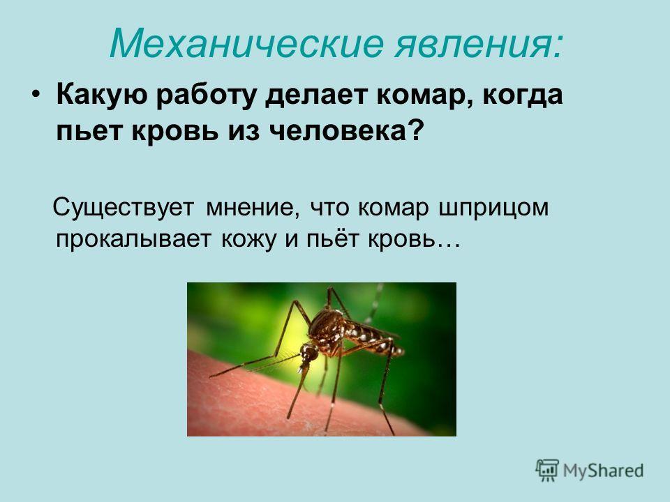 Механические явления: Какую работу делает комар, когда пьет кровь из человека? Существует мнение, что комар шприцом прокалывает кожу и пьёт кровь…