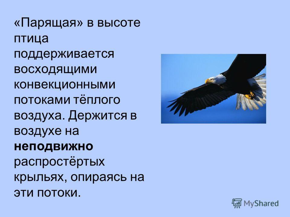 «Парящая» в высоте птица поддерживается восходящими конвекционными потоками тёплого воздуха. Держится в воздухе на неподвижно распростёртых крыльях, опираясь на эти потоки.