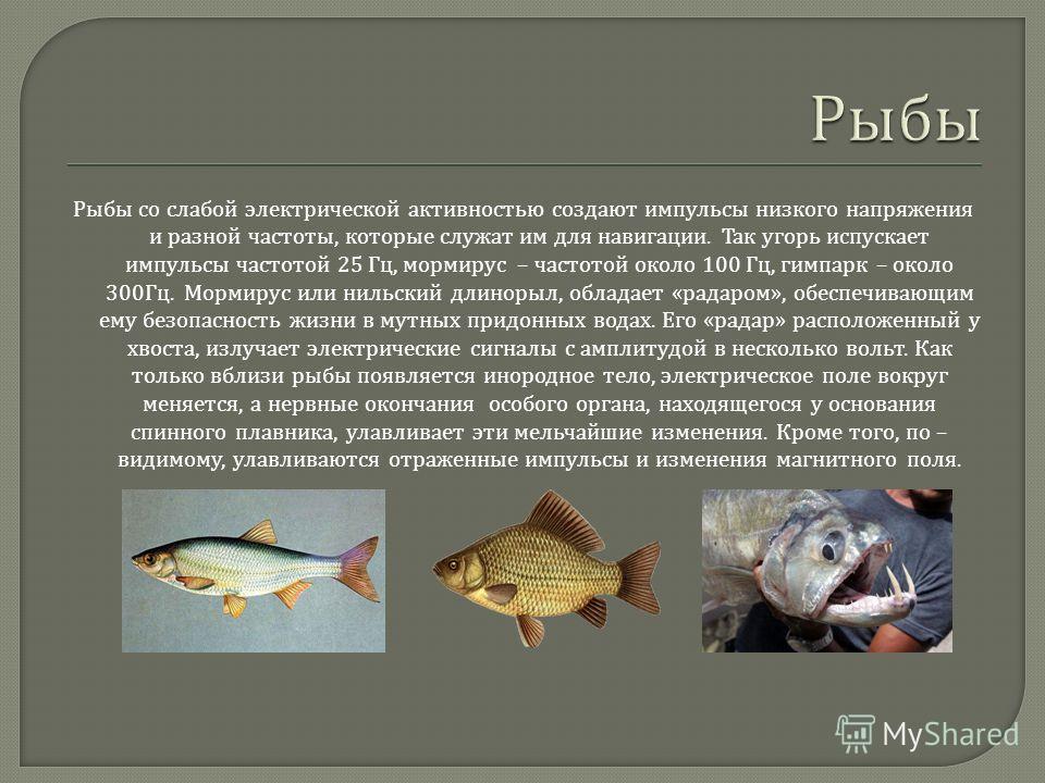 Рыбы со слабой электрической активностью создают импульсы низкого напряжения и разной частоты, которые служат им для навигации. Так угорь испускает импульсы частотой 25 Гц, мормирус – частотой около 100 Гц, гимпарк – около 300 Гц. Мормирус или нильск