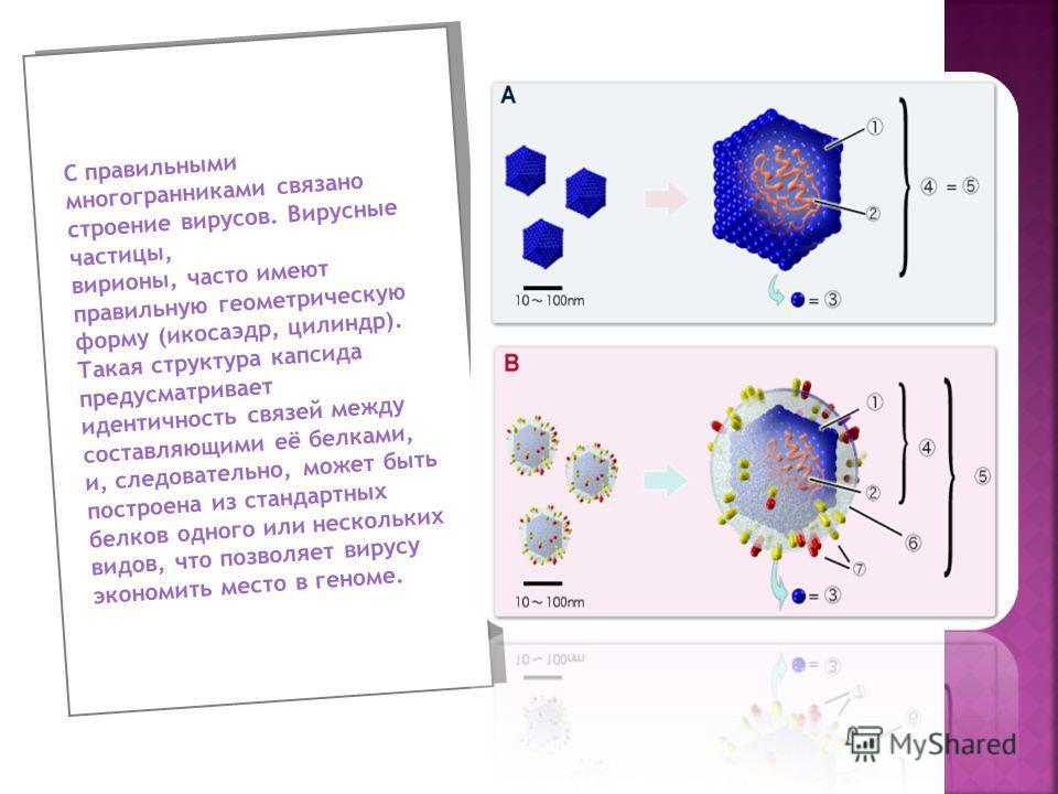 С правильными многогранниками связано строение вирусов. Вирусные частицы, вирионы, часто имеют правильную геометрическую форму (икосаэдр, цилиндр). Такая структура капсида предусматривает идентичность связей между составляющими её белками, и, следова