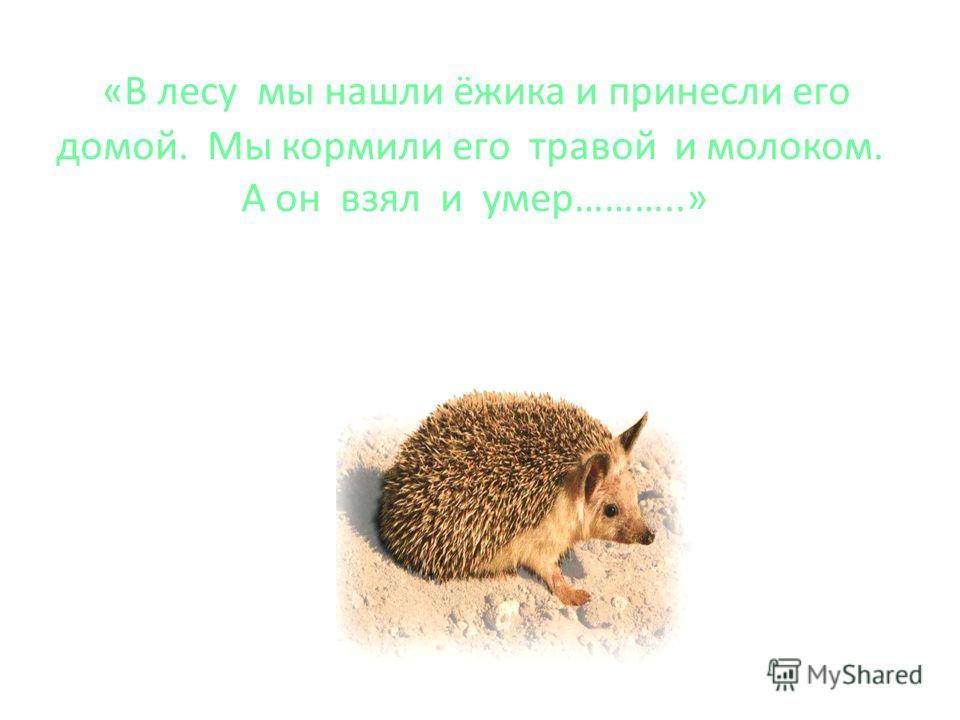 «В лесу мы нашли ёжика и принесли его домой. Мы кормили его травой и молоком. А он взял и умер………..»