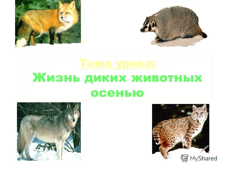 Тема урока: Жизнь диких животных осенью