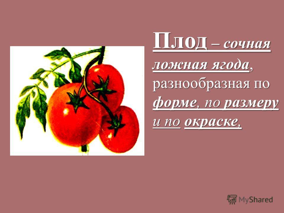 Плод – сочная ложная ягода, разнообразная по форме, по размеру и по окраске,