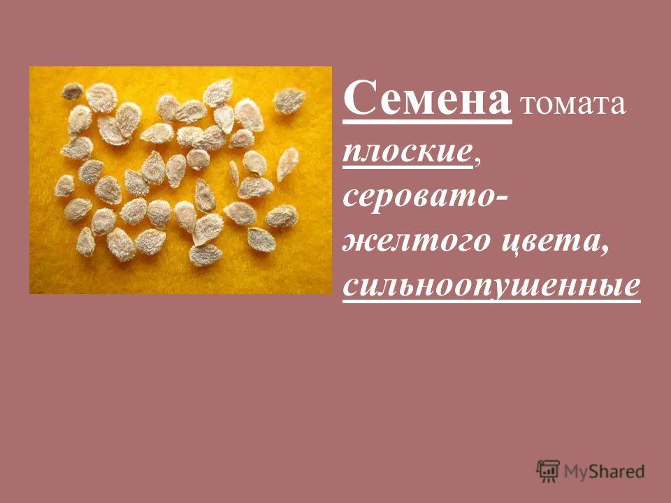 Семена томата плоские, серовато- желтого цвета, сильноопушенные