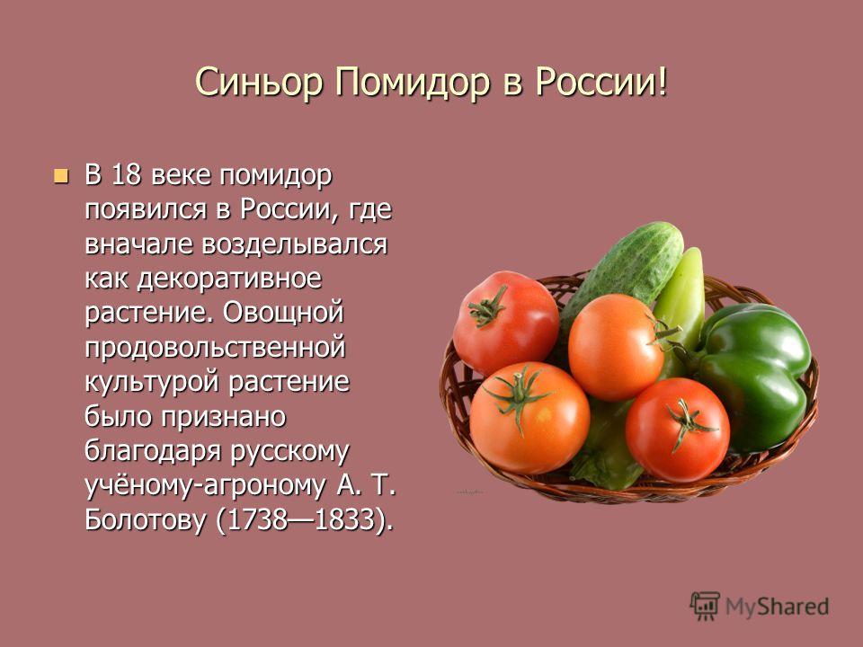 Синьор Помидор в России! В 18 веке помидор появился в России, где вначале возделывался как декоративное растение. Овощной продовольственной культурой растение было признано благодаря русскому учёному-агроному А. Т. Болотову (17381833). В 18 веке поми