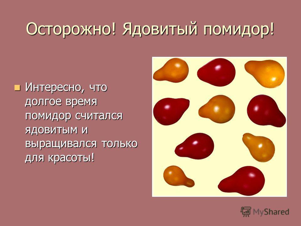 Осторожно! Ядовитый помидор! Интересно, что долгое время помидор считался ядовитым и выращивался только для красоты! Интересно, что долгое время помидор считался ядовитым и выращивался только для красоты!