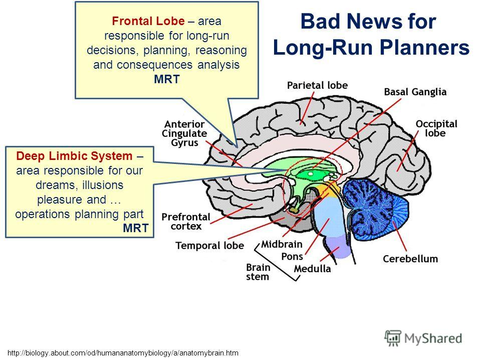 Frontal Lobe – area responsible for long-run decisions, planning, reasoning and consequences analysis MRT Deep Limbic System – area responsible for our dreams, illusions pleasure and … operations planning part MRT Bad News for Long-Run Planners http: