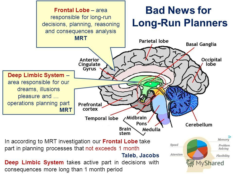 Frontal Lobe – area responsible for long-run decisions, planning, reasoning and consequences analysis MRT Deep Limbic System – area responsible for our dreams, illusions pleasure and … operations planning part MRT Bad News for Long-Run Planners In ac